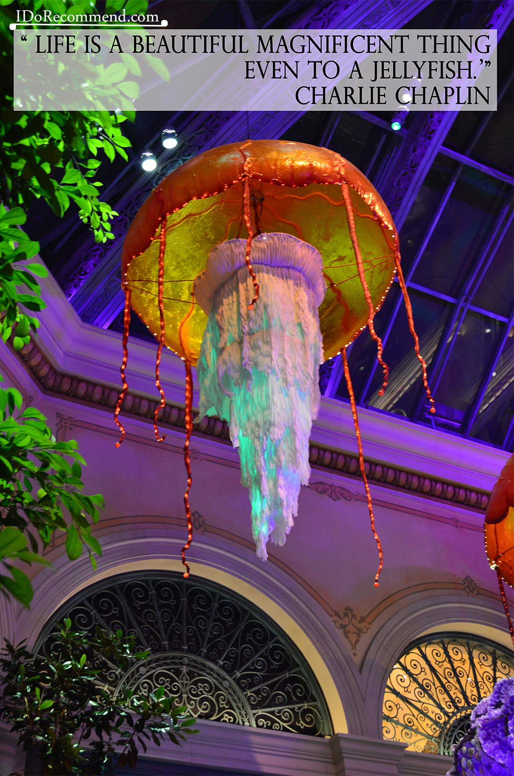 "Quote ""Life is a beautiful magnificent thing even to a jellyfish"" (photo from USA, Las Vegas, Bellagio Hotel)"