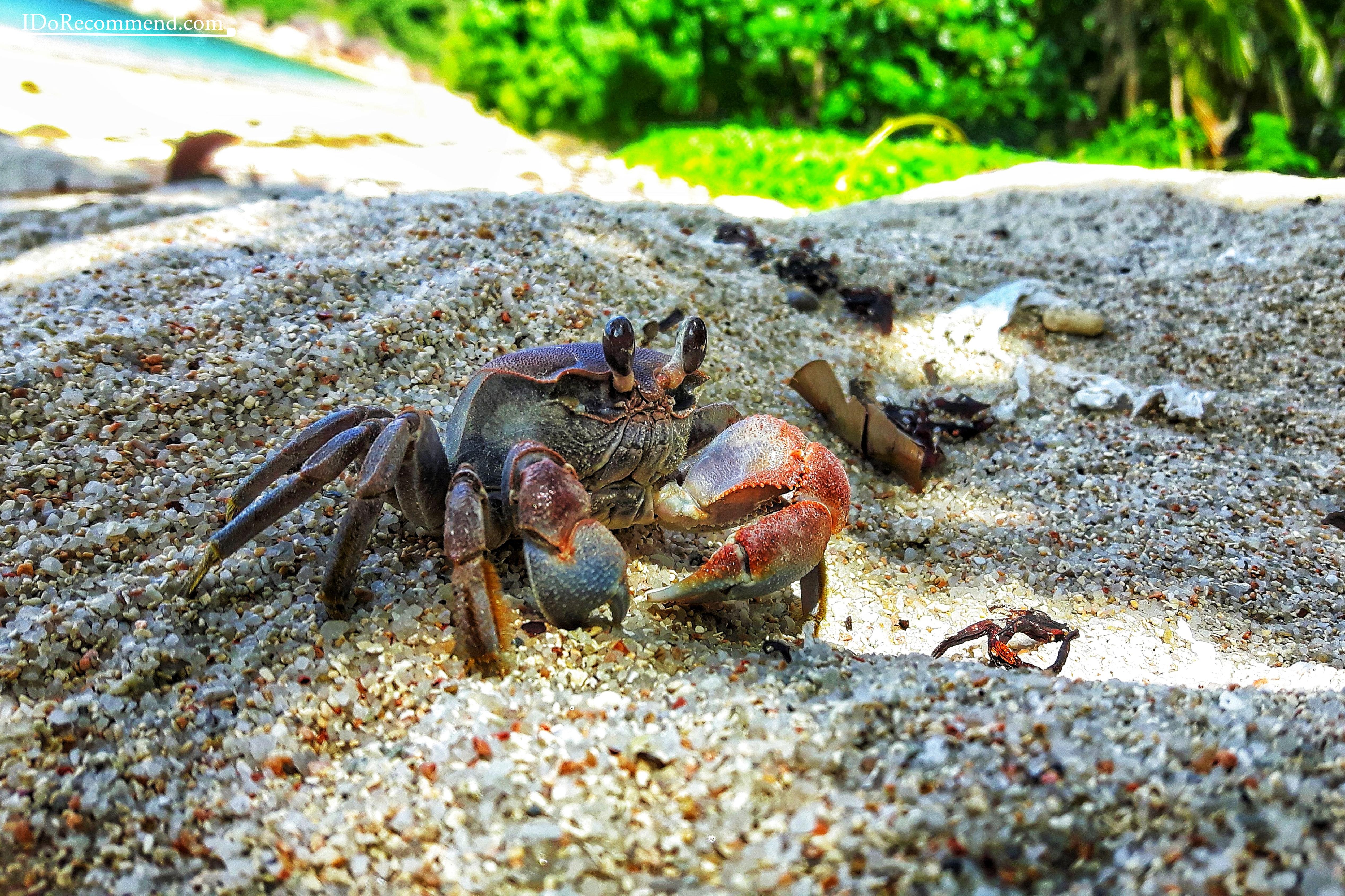 Seychelles_La_Digue_fauna