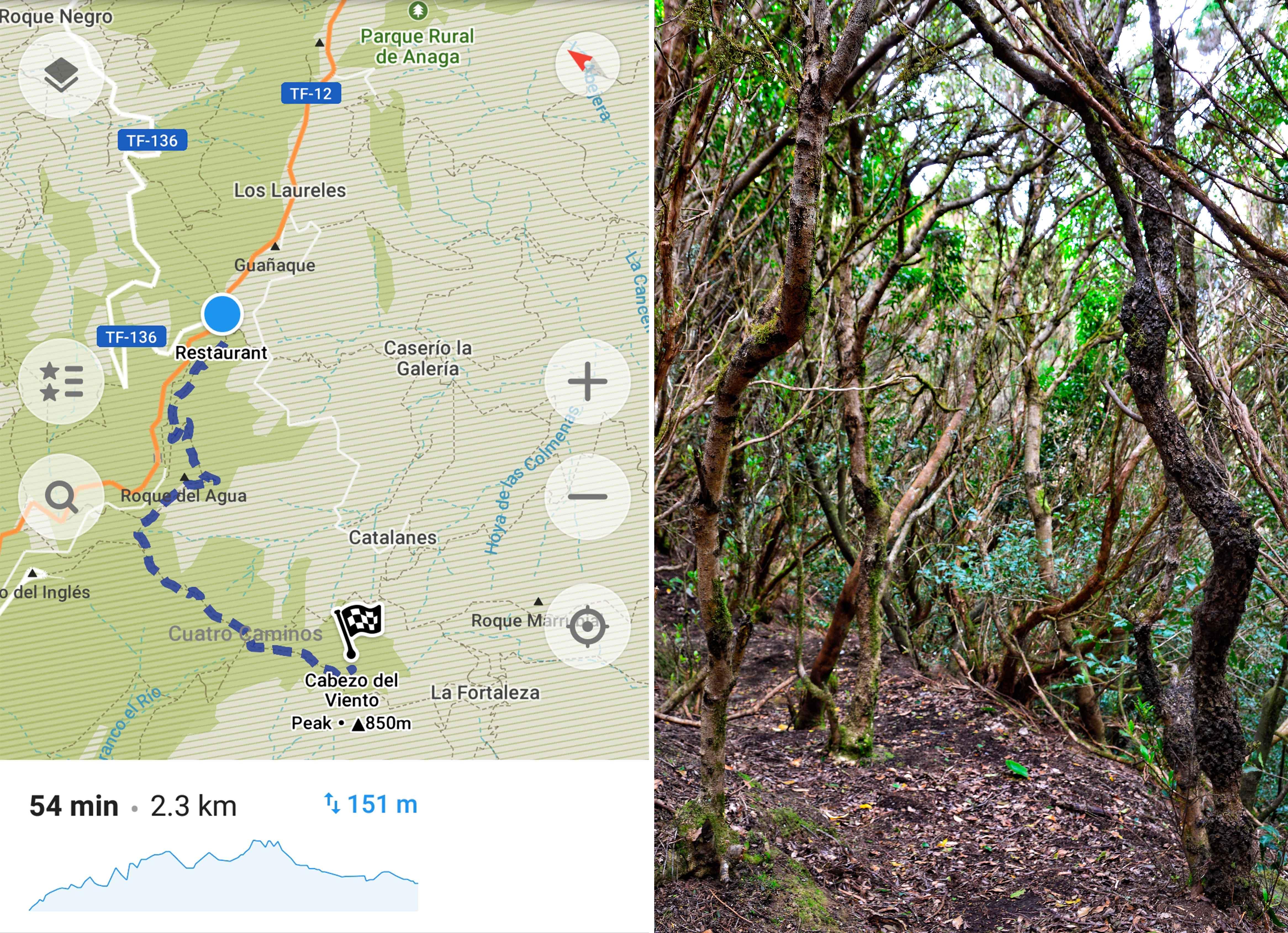 IDoRecommend_Spain_Canary_Tenerife_Feb_Anaga_Park_Cabezo_Del_Viento_trail