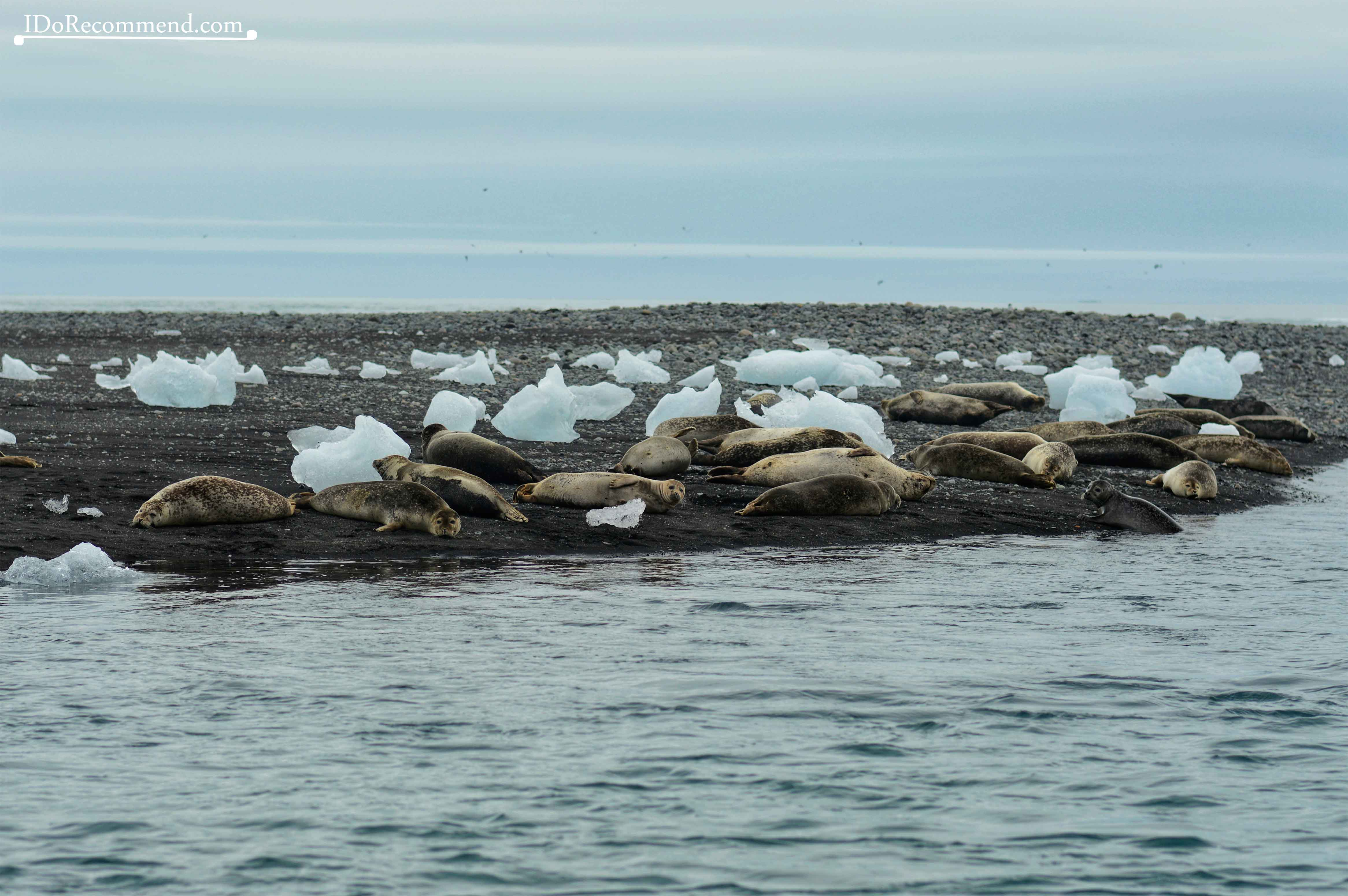 Seals near Diamond Beach