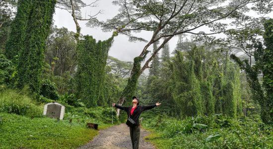 Manoa Falls Trail – O'ahu